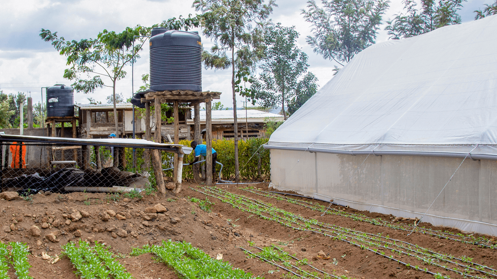 Tank supplying water to greenhouse and drip irrigation